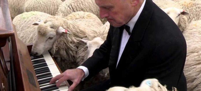 Concierto de piano para ovejas